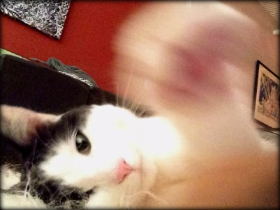 Arbus-Cat